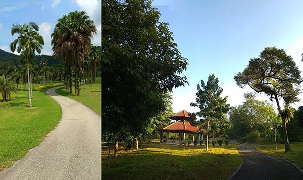 Aktiviti berjoging hanya dibenarkan atas jalan berturap dan trek joging di KBG (kiri) dan Taman Warisan FRIM.