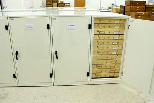 The insect specimens stored